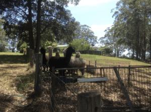 Berry Accomodation NSW Villa
