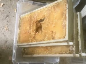 Frames of honey ready to process